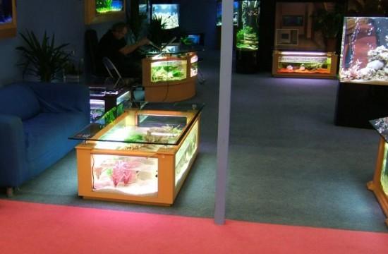 Backlit coffee table fish tank