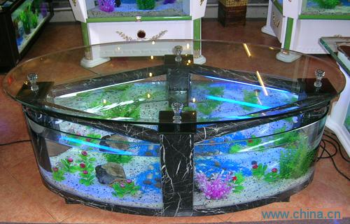 Oval coffee table fish tank