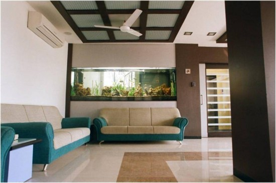 African cichlids office aquarium