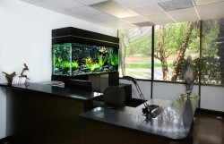 Larger fish tank in a clean office.
