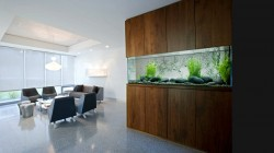 Modern wall fish tank.