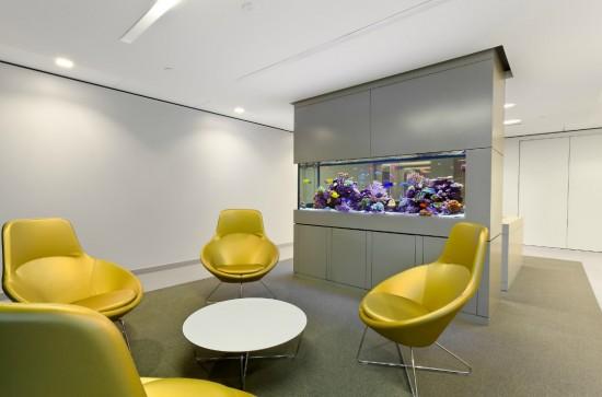 Simple office aquarium