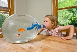 Blowing fish tank