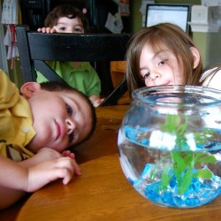 Children with a fish aquarium