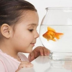 Goldfish are one of the fish that requires the least care and maintenance.