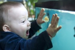 Kid and fish tank