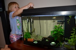Kid feeding fish