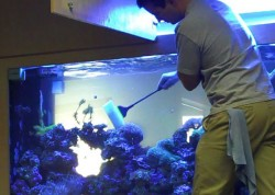 Fish tank maintenance