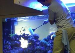 Fish tank maintenance