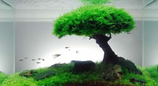 Fish tank materials
