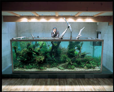 Large Fish Tank Images amp Pictures Becuo