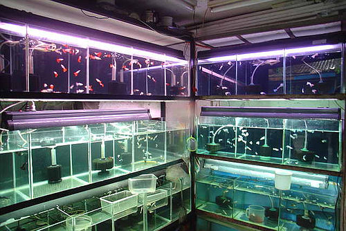 how to buy a good fish tank glass fish tanks buy fish 500x334