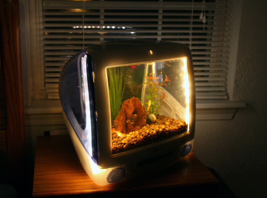 How to build a glass fish tank glass fish tanks for Custom made fish tanks