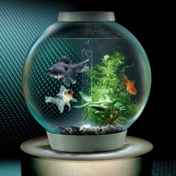Common sizes of fish tanks glass fish tanks for Small glass fish tank
