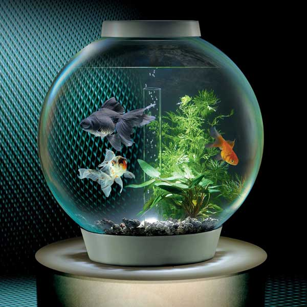 Common sizes of fish tanks glass fish tanks for Small fish tank